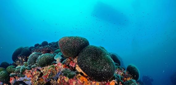 immersione Punta Secca Tremiti