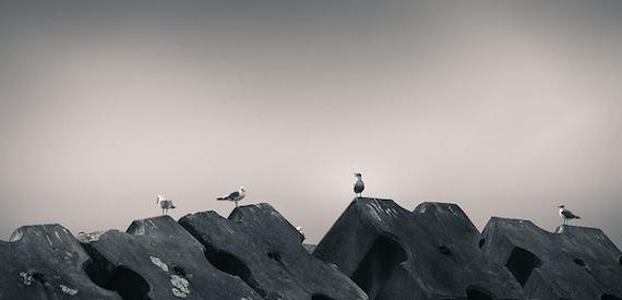 Diomedee uccelli Tremiti